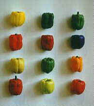 Porcelain Peppers by Donald Stahlke